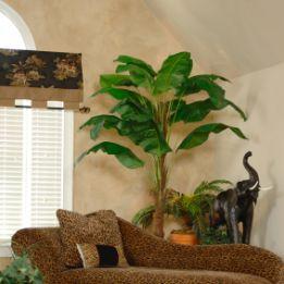 beneficios-de-las-plantas-en-el-hogar